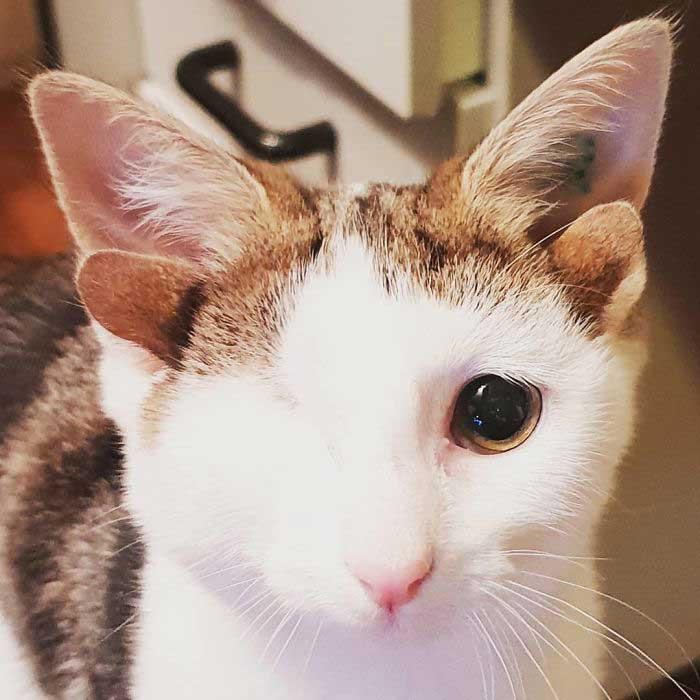 귀 네 개, 눈 하나 고양이를 구조 했더니