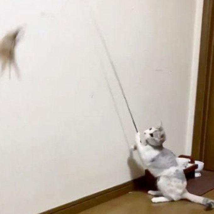 집사 없어도 됨, 낚싯대 흔드는 법 터득해 혼자 노는 천재 고양이
