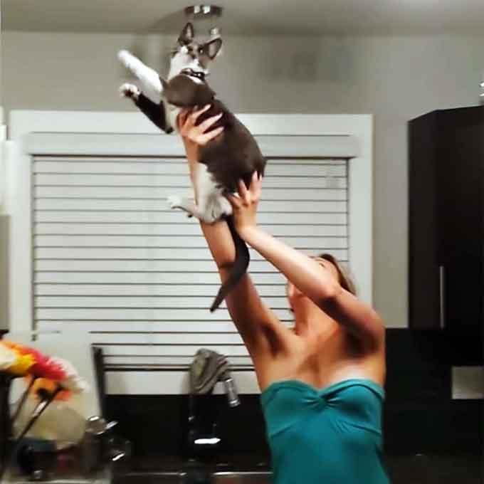 고양이와 협력해 나방 퇴치하는 여성