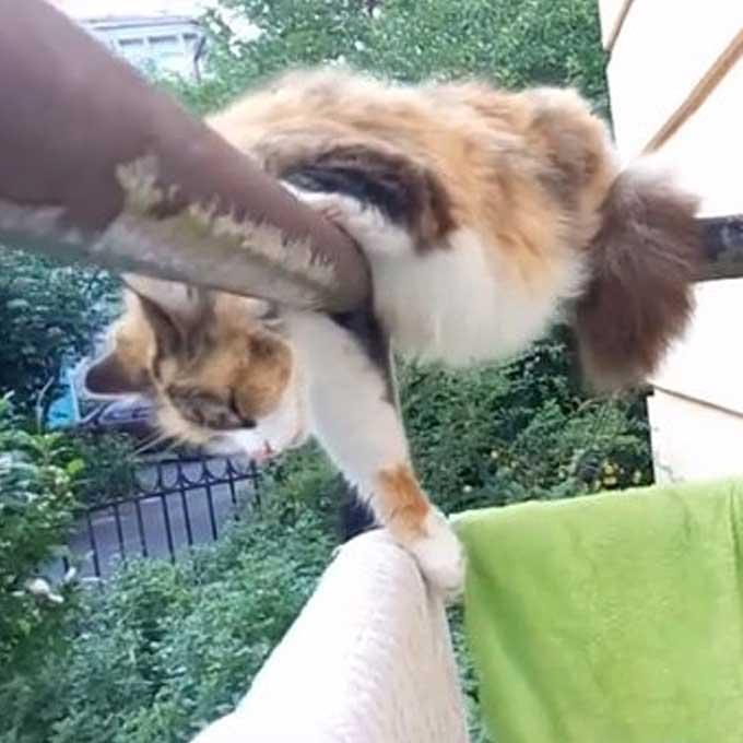 난간에서도 잘 자는 고양이의 신체능력