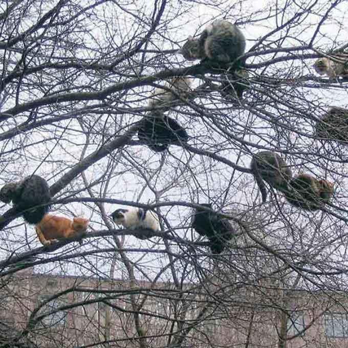 고양이가 나무 위에서 살았다는 증거 사진 모음
