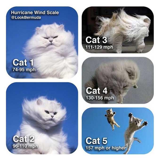 태풍 강도를 고양이로 표현해보았다