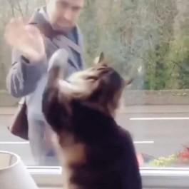 """""""출근?"""" 수고!"""", 창가에 앉아 행인한테 열정적으로 손 흔들어주는 고양이"""