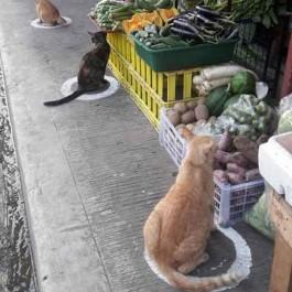 사회적 거리두기 서클 그려놨더니 동네 고양이가 쏙!