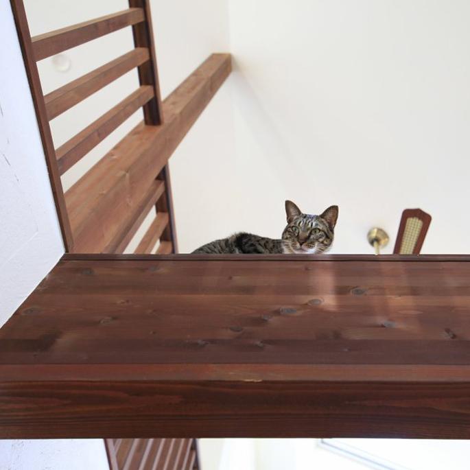 고양이를 위해 새집을 짓다