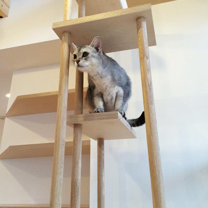 고양이와 사는 작은 집