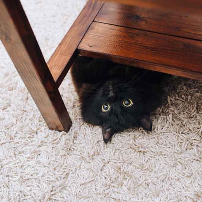 고양이한테 스트레스 안 주며 집 꾸미는 법 4