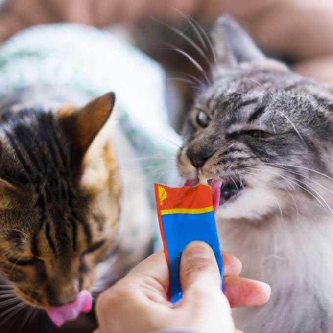 왜 고양이는 간식에 환장할까? 사료보다 잘 먹는 이유와 올바르게 주는 법