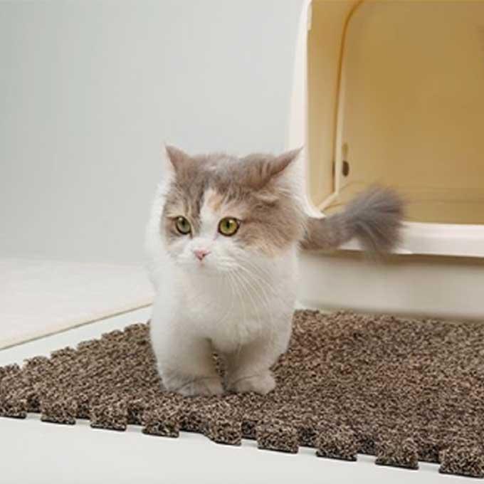 젤리는 소중하니까, 올바른 모래매트 선택법 4