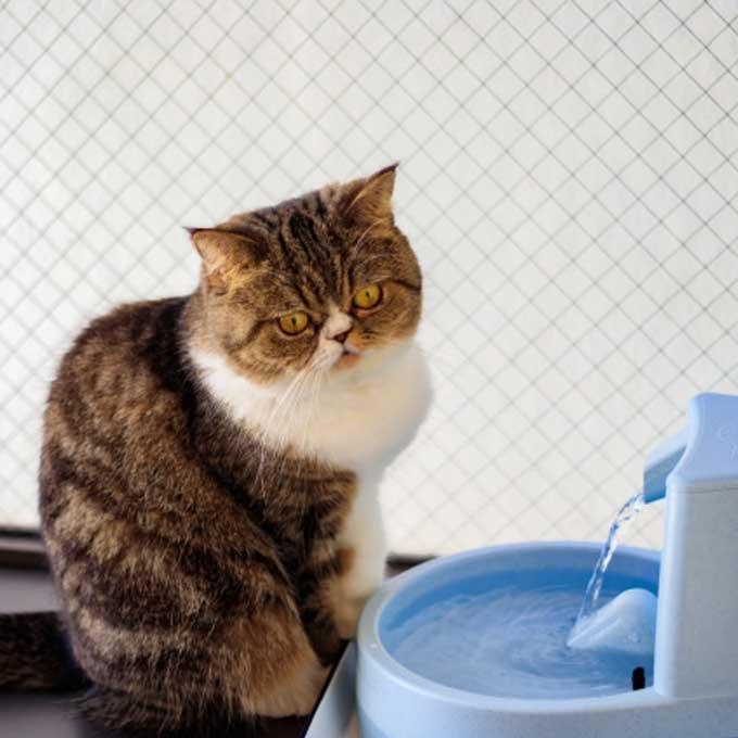 남들 다 사니까 사는 게 아님, 고양이 정수기가 필요한 찐 이유 5
