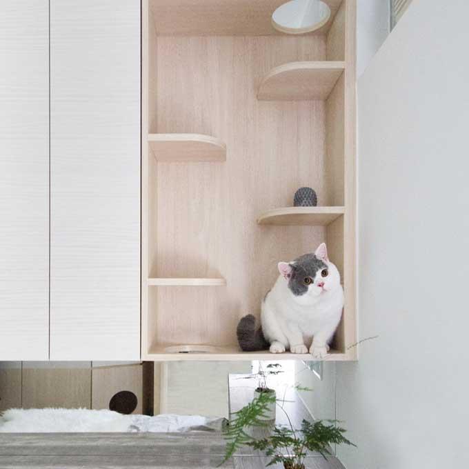 새와 고양이가 함께 사는 13평 집 인테리어