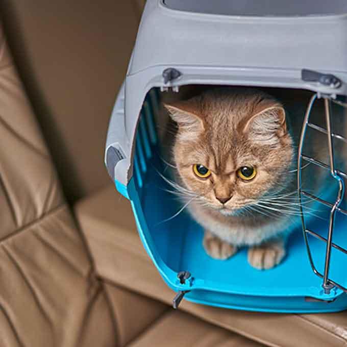고양이가 '극혐'하는 이동장, 은신처로 만드는 법과 종류별 특징