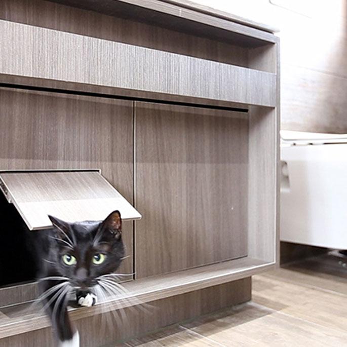 고양이 친화적인 8평 집