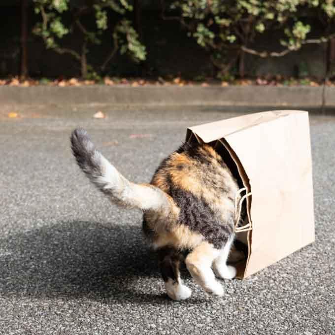 고양이가 아늑하다고 느끼는 장소 특징 4