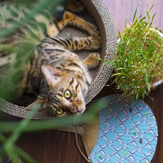 땀도 안 흘리는 고양이가 더위 이기는 법 & 폭염 깨부수는 여름 용품 5선