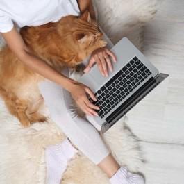 고양이와 집사 모두에게 '편안하고 따뜻한' 겨울 카펫 고르는 법