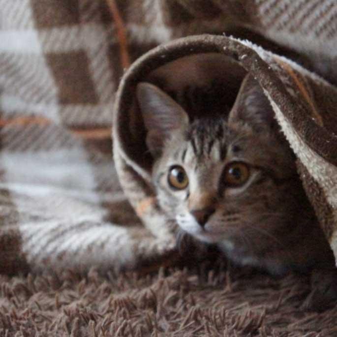 일본 냥들의 겨울 나는 법으로 세워보는 고양이 추위 대책