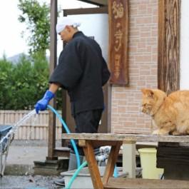 묘연을 맺어드립니다, 후쿠이 현 '고양이 절 이야기'