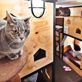 건물 한 채가 고양이와 냥덕후를 위해 꾸며지다, 오사카 '고양이 빌딩'