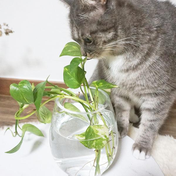고양이의 호기심 스위치