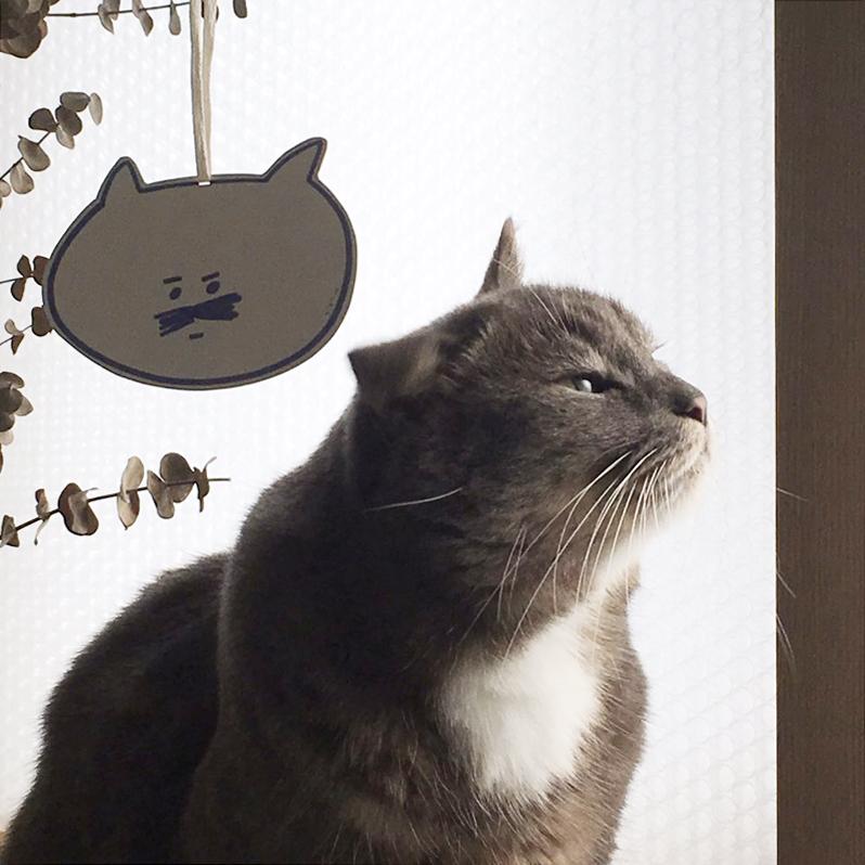 고양이 vs 고양이