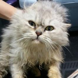 입양 - 닭장 속에 갇혀 살던 세마리 고양이