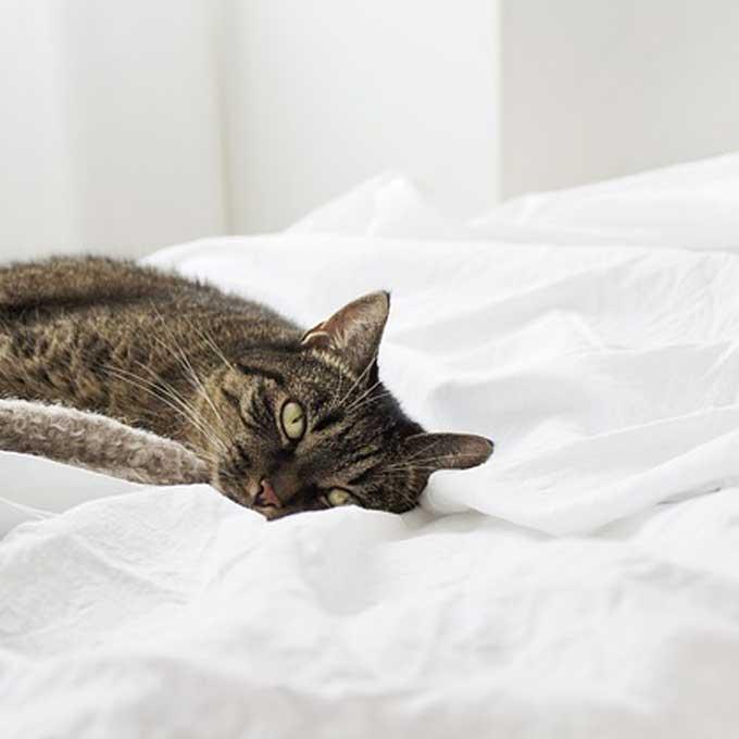 Q. 고양이가 마중 나와주지 않는 이유 6
