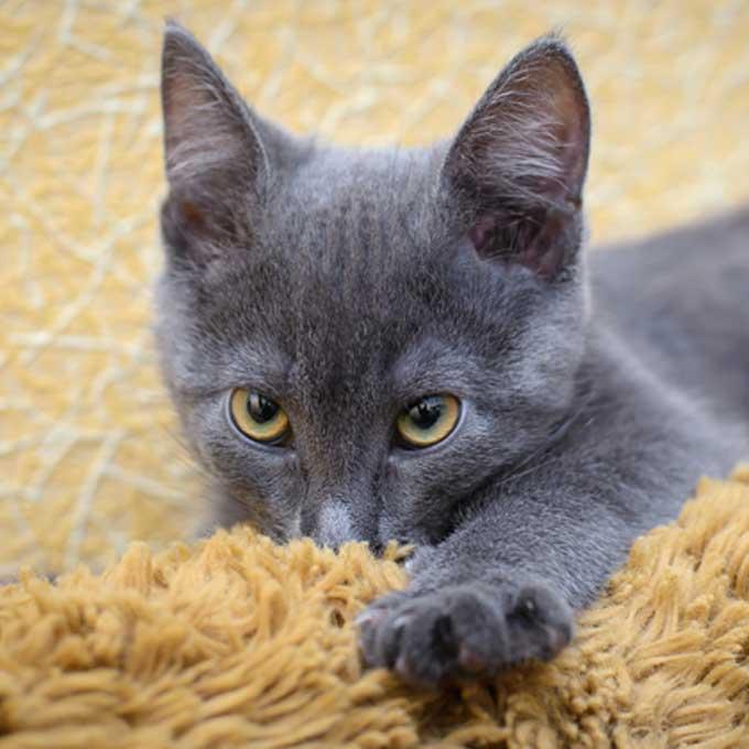 일명 '울 서킹', 고양이가 춥춥 소리 내며 천 빠는 이유