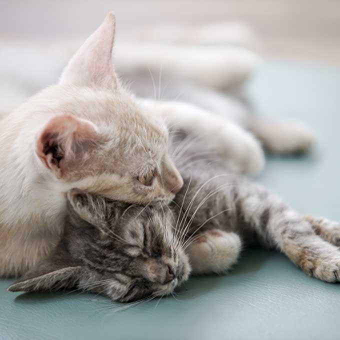 Q. 고양이는 동료 고양이의 죽음을 이해할까