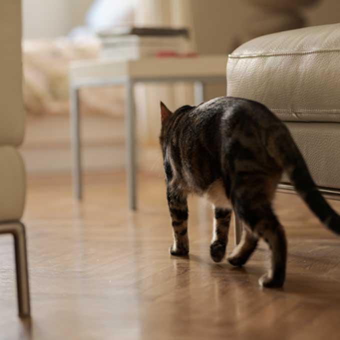 Q. 고양이가 방을 돌아다니는 이유