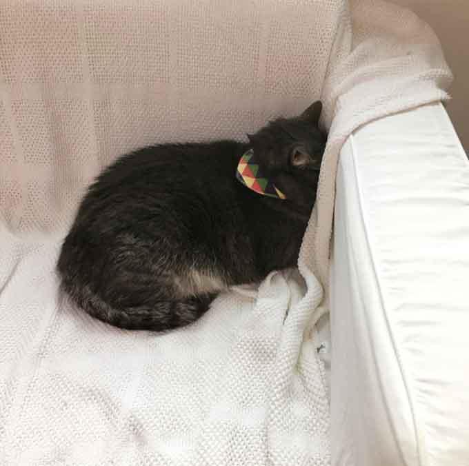 Q. 고양이가 머리를 벽에 대고 자는 이유