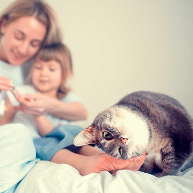 평소보다 고양이가 더 격하게 부비부비를 할 때 마음 5