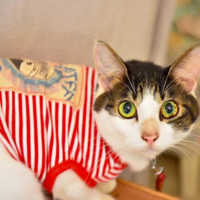 Q. 고양이에게 옷을 입히면 안 되는 이유 4