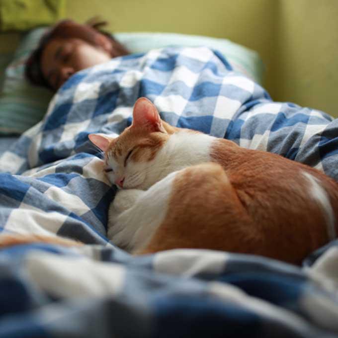 Q. 밤 시간대 고양이가 보내는 애정 사인 4