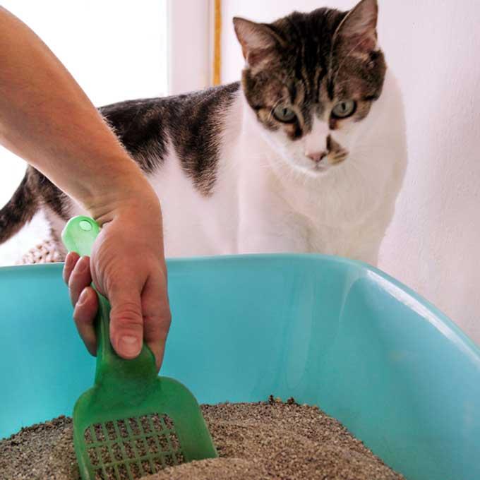 Q. 집사생활 좀 해봤다는 냥덕도 착각하는 고양이 행동 9
