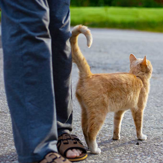 고양이가 꼬리를 집사 몸에 '살짝' 붙이고 있을 때 마음 3