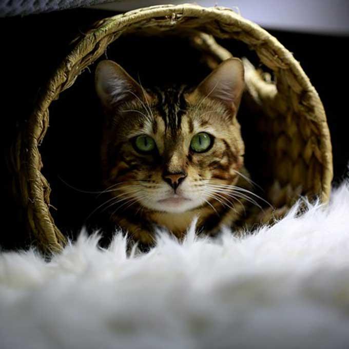 Q. 고양이가 숨어서 나오지 않을 때 마음 5