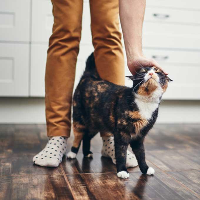 Q. 고양이가 집사 다리 사이를 왔다 갔다 할 때 마음 5