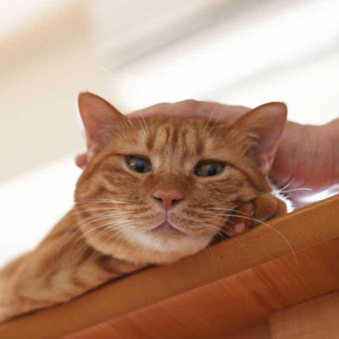 Q. 고양이가 마음이 몹시 복잡해지는 순간 4