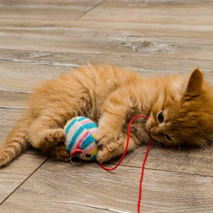 Q. 고양이가 뒷발차기를 할 때 기분 3