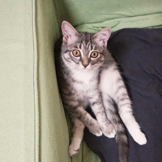 Q. 앉은 자세로 본 고양이 기분   6