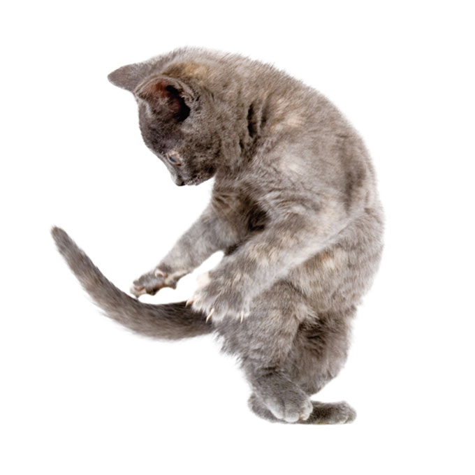 Q. 고양이가 꼬리를 잡으려고 빙글빙글 돌 때 마음 4