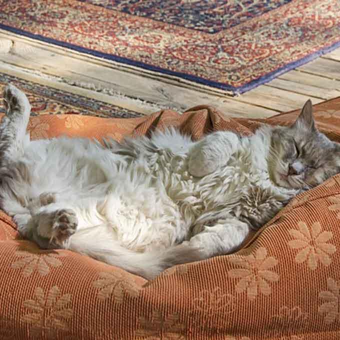"""""""이러면 대박 편한 거임"""", 수면 자세로 보는 고양이 마음 5"""