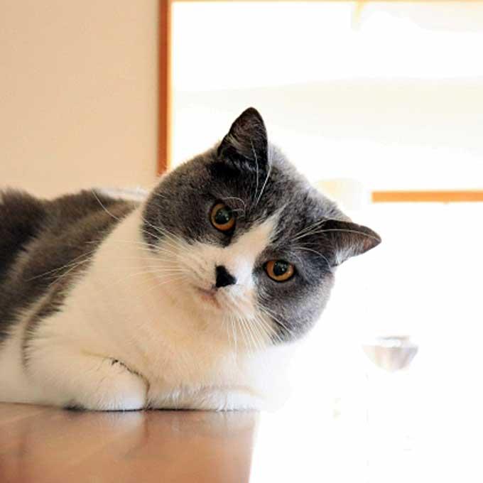 고양이가 오랜만에 만난 집사를 몰라보는 이유