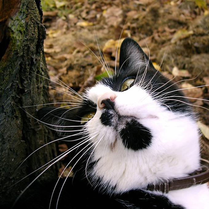 고양이 수염 모양으로 알아 보는 심리 6