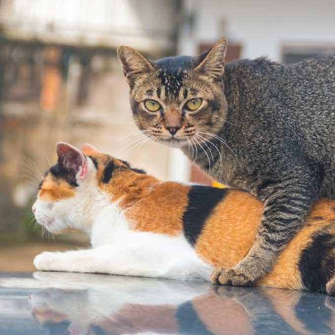 고양이가 마운팅 행동을 할 때 마음 3