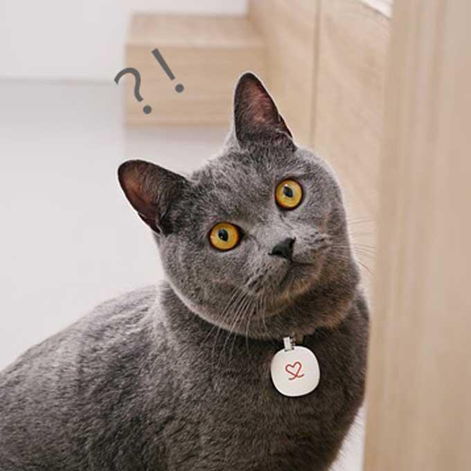 Q. 고양이는 정말 주인을 못알아 볼까?