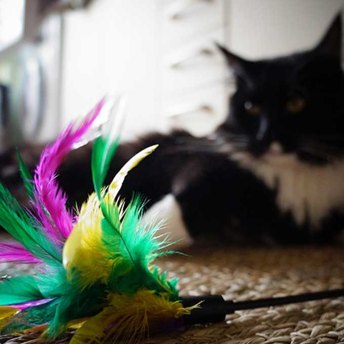 Q. 고양이가 집사에게 장난감을 가져오는 이유 3