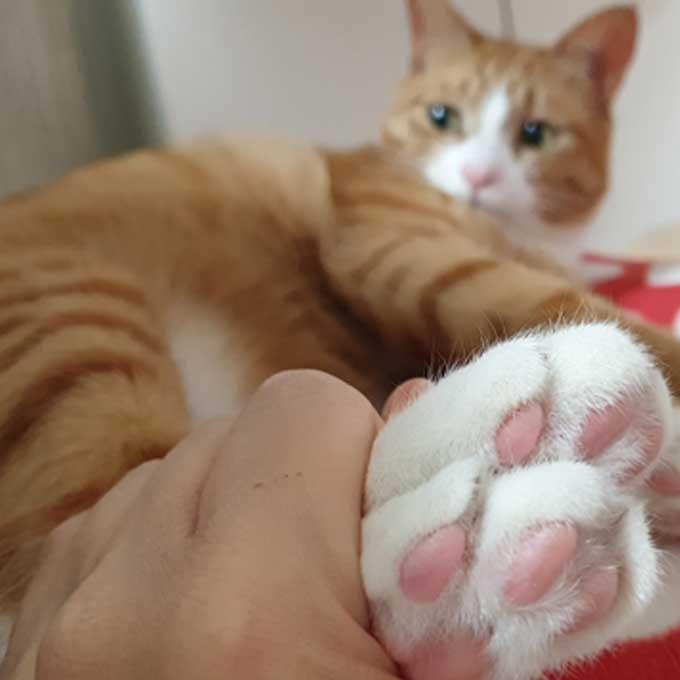 Q. 집사가 만져주면 고양이가 기분 좋은 6 곳 Vs 싫어하는 4 곳