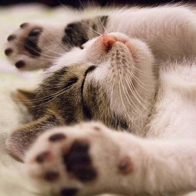 Q. 고양이는 왜 그토록 귀엽게 느껴질까